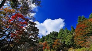 Preview wallpaper nature, autumn, trees