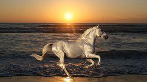 Preview wallpaper nature, stallion, horse, animals, rides, sea