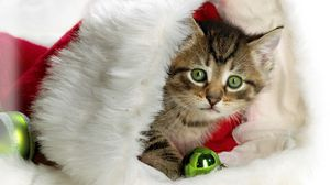 Preview wallpaper new year, christmas, kitten, hat, attribute