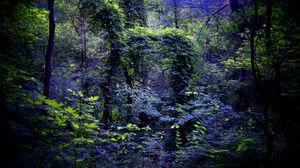Preview wallpaper night, forest, nature
