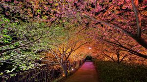 Preview wallpaper night, spring, park, alley lights