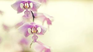 Preview wallpaper orchid, branch, plant, flower