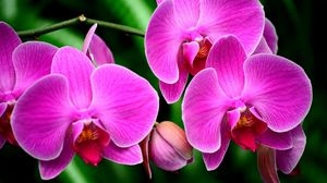 Preview wallpaper orchid, flower, branch, exotic