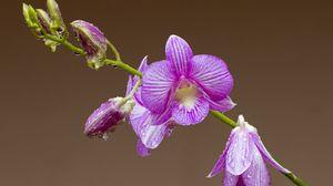Preview wallpaper orchid, flower, petals, drops