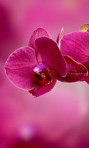 Preview wallpaper orchid, flower, petals, pink