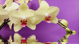 Preview wallpaper orchid, twig, water, reflection