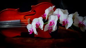 Preview wallpaper orchid, two-tone, branch, violin