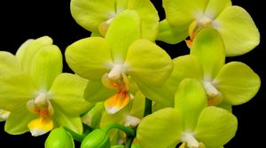 Preview wallpaper orchid, yellow, flower, close-up, twig, black background