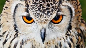 Preview wallpaper owl, beak, eyes, close up