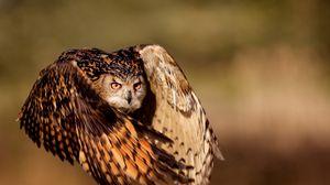 Preview wallpaper owl, bird, flying, wings