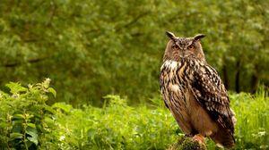 Preview wallpaper owl, birds, grass, herbs, predator