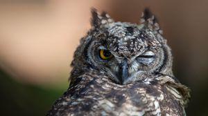 Preview wallpaper owl, eyes, bird, predator
