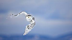 Preview wallpaper owl, flying, bird, white, predator