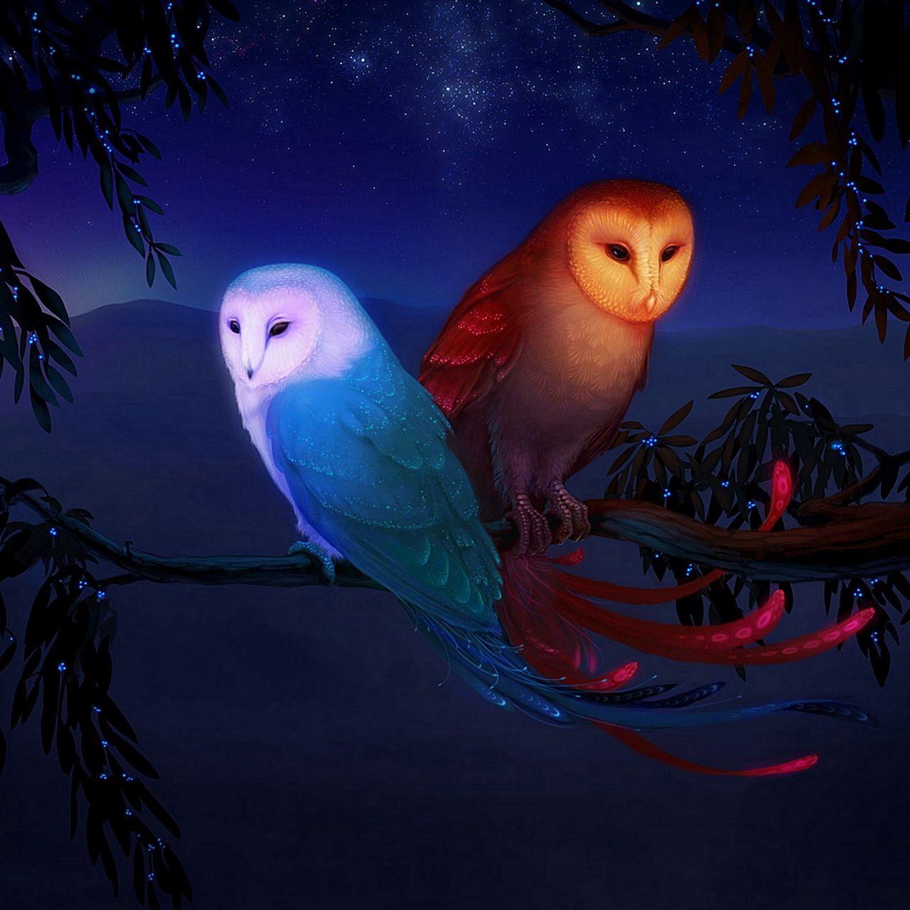 1280x1280 Wallpaper owl, night, birds, branch
