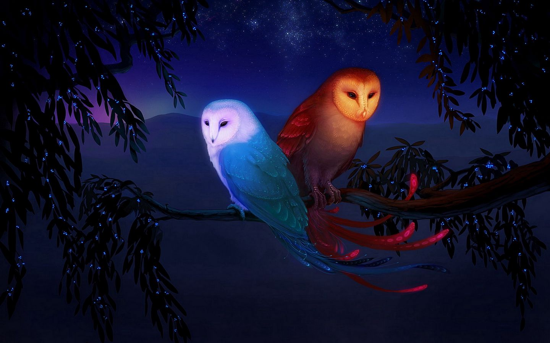 1440x900 Wallpaper owl, night, birds, branch