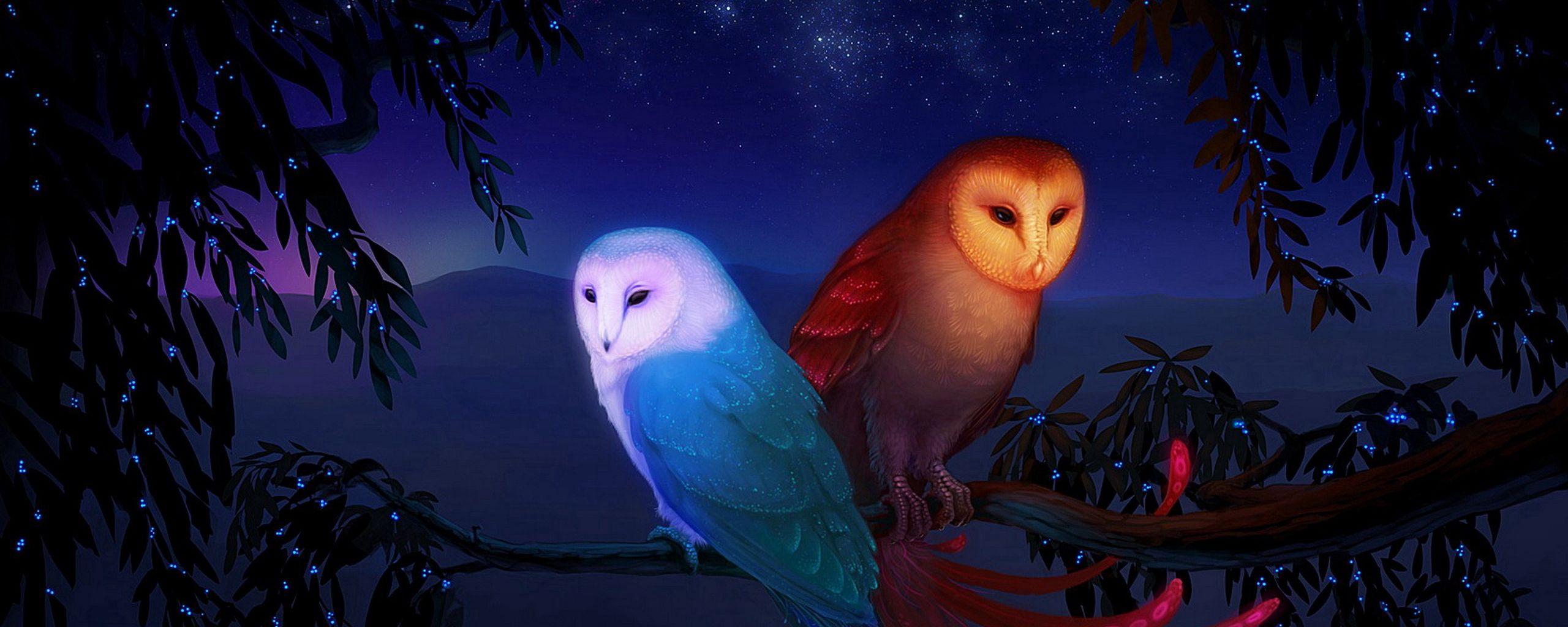 2560x1024 Wallpaper owl, night, birds, branch