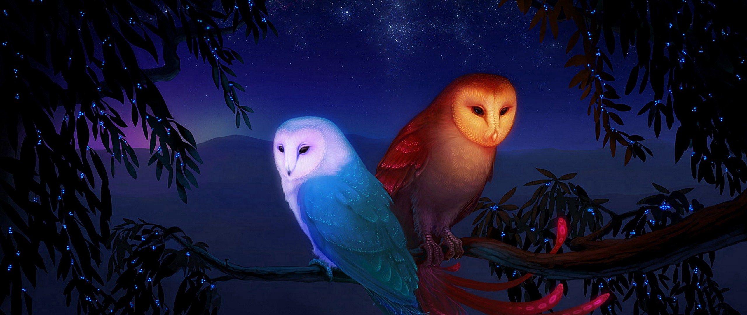 2560x1080 Wallpaper owl, night, birds, branch