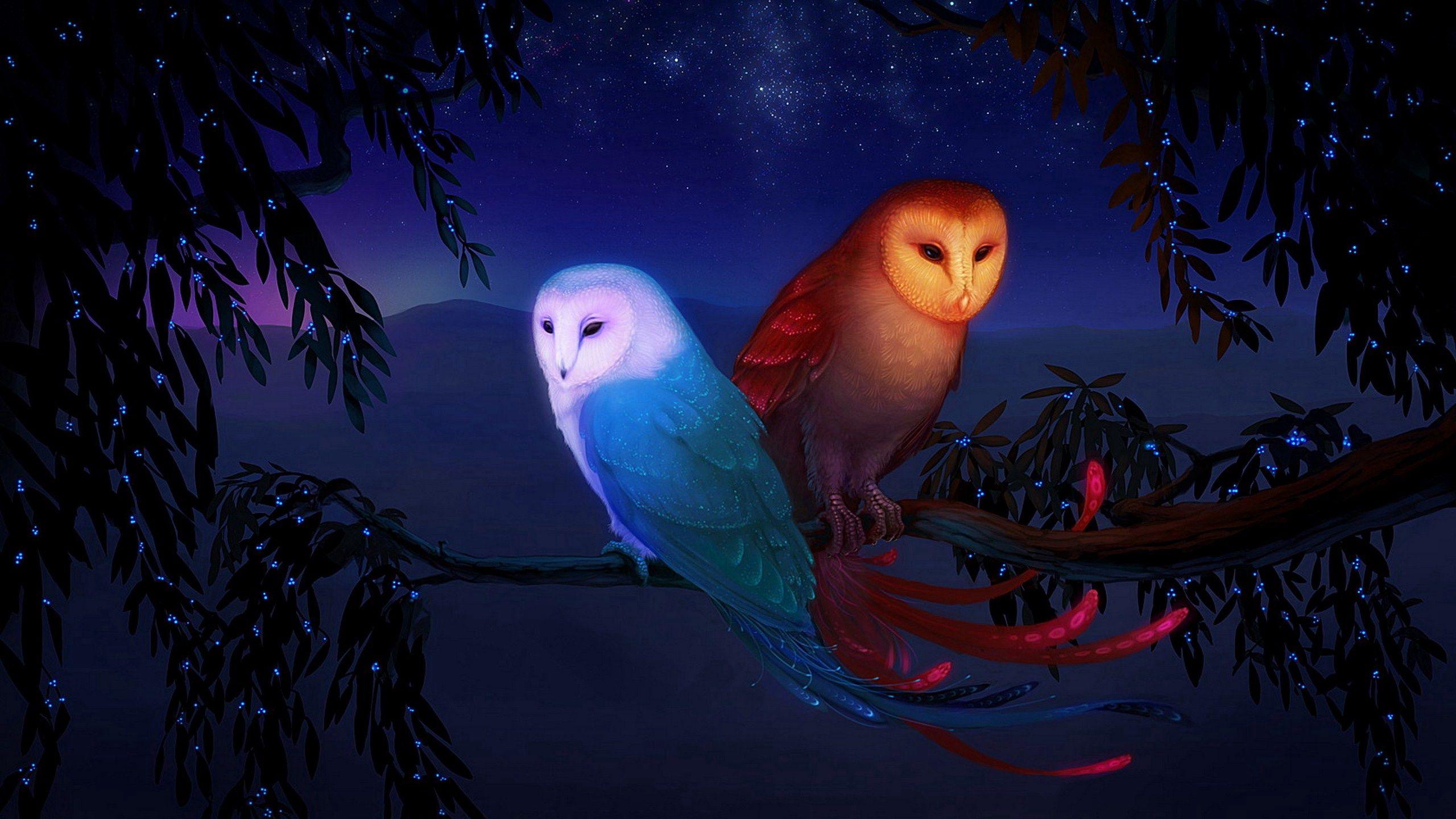 2560x1440 Wallpaper owl, night, birds, branch