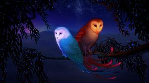 Preview wallpaper owl, night, birds, branch