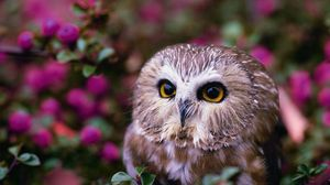 Preview wallpaper owl, tree, flowers