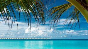 Preview wallpaper palm, beach, ocean, tropics, coast