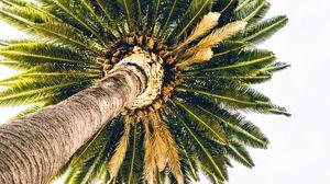 Preview wallpaper palm, bottom view, minimalism, tree