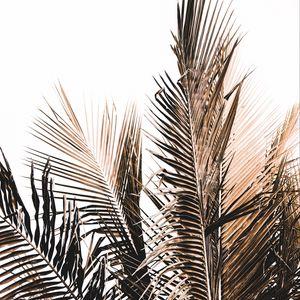 Preview wallpaper palm, branch, white, minimalism