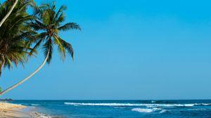 Preview wallpaper palm, palm trees, beach, tropics, shore, surf, ocean, sea