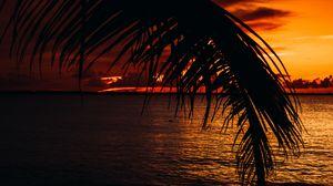 Preview wallpaper palm, sea, sunset, dark, twilight