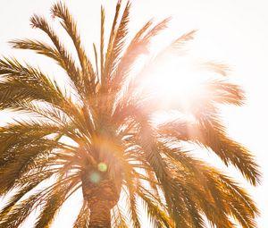 Preview wallpaper palm, sun, flare, light, bright