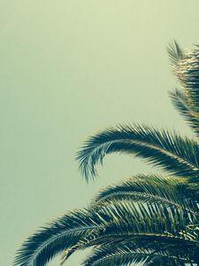 Preview wallpaper palm, tree, branch, tropics