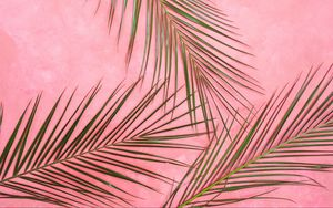 Preview wallpaper palm tree, branches, pastel, leaves, minimalism