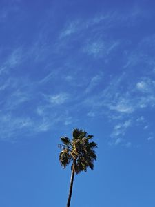 Preview wallpaper palm, tree, sky, clouds, minimalism