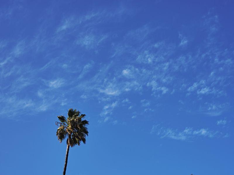 800x600 Wallpaper palm, tree, sky, clouds, minimalism