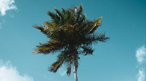 Preview wallpaper palm, tree, tropics, sky, clouds