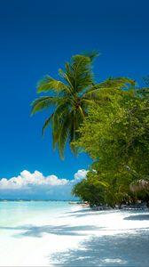 Preview wallpaper palm trees, beach, ocean, tropics, coast, paradise