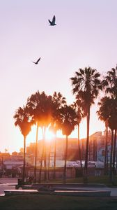 Preview wallpaper palm trees, dawn, birds, venice beach, los angeles, united states