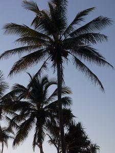 Preview wallpaper palm trees, sky, nature, tropics