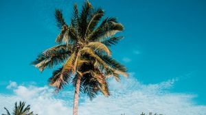 Preview wallpaper palm, tropics, summer, sky