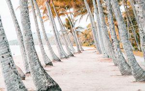 Preview wallpaper palms, beach, tropics, trees, sand