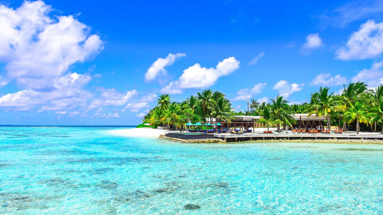 Wallpaper palms, ocean, beach, vacation, paradise