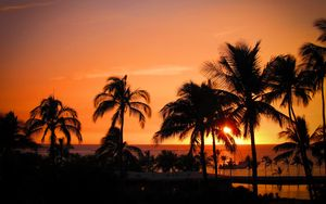 Preview wallpaper palms, sunset, hawaii, tropics, ocean, horizon