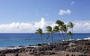 Preview wallpaper palms, trees, beach, sea, landscape