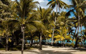 Preview wallpaper palms, tropics, beach, mauritius