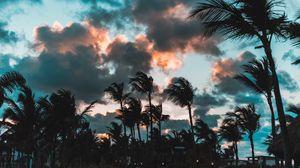 Preview wallpaper palms, wind, clouds, tropics, punta cana, dominican republic