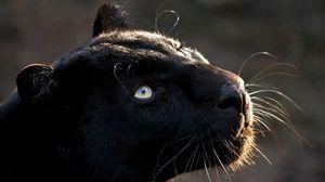 Preview wallpaper panther, big cat, muzzle, predator, dark