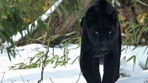 Preview wallpaper panther, walk, snow, winter, predator, big cat