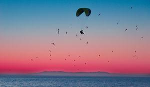 Preview wallpaper paragliding, parachute, sea, flight, birds, horizon