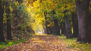 Preview wallpaper park, autumn, foliage, trees, path