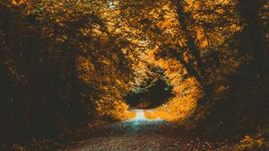Preview wallpaper park, autumn, path, forest, foliage, trees